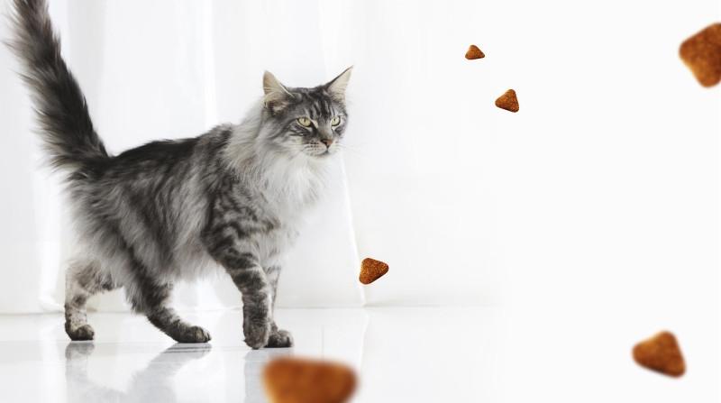 a0a3b26a0731 Ποσότητα Τροφής που Πρέπει να Ταΐζετε τη Γάτα σας