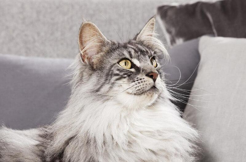 4708a973d47c Πόση ποσότητα τροφής πρέπει να δίνετε στην γάτα σας