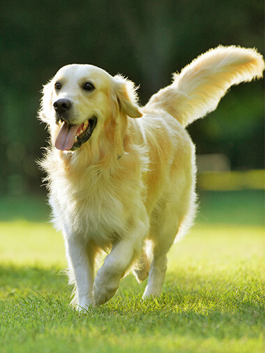Running Retriever