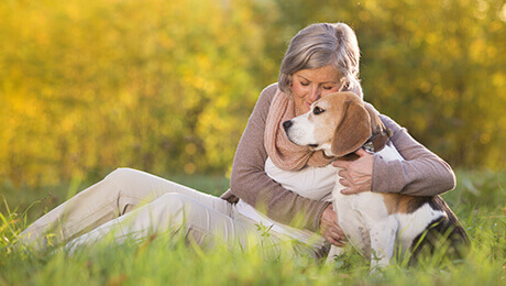 Beagle outside with owner