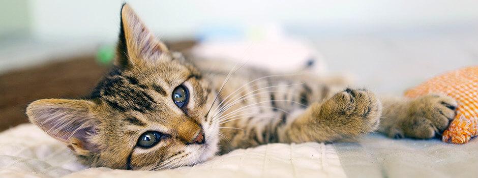 0e96dd41cb80 Δημιουργώντας ένα φιλικό σπίτι για τις γάτες