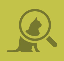 Green cat and magnifying glass icon