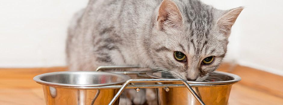 9437114fb2c9 Τί να ταΐσετε ένα γατάκι