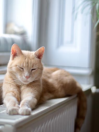 ef9b3f28a0a0 Η διατροφή της ενήλικης γάτας