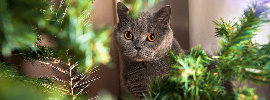 ed79449803f8 Φροντίδα και ψυχολογία γάτας