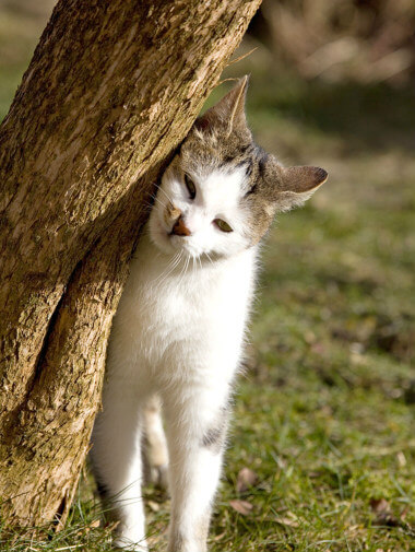 38eac904e98e Κατανοώντας γιατί οι γάτες μαρκάρουν την περιοχή τους