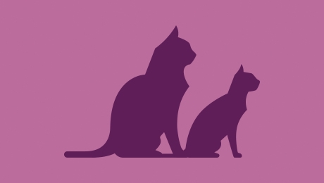 Two-Cats-purple