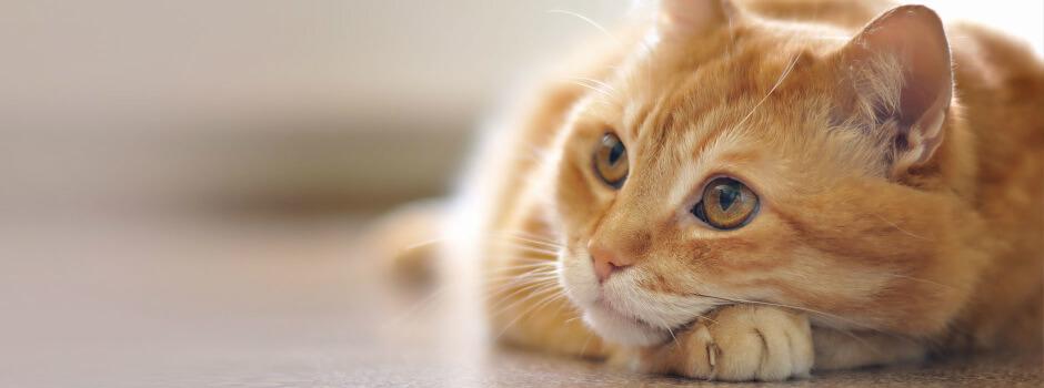 23a91732246a Φροντίδα και ψυχολογία γάτας