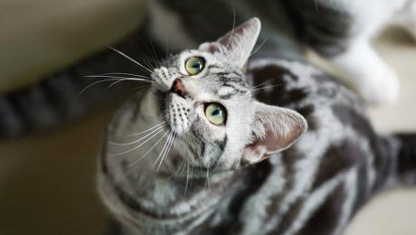 d3b31f662381 Φροντίδα και ψυχολογία γάτας