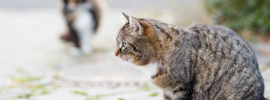 c273c15081a6 Καταστροφικά προβλήματα συμπεριφοράς μιας γάτας