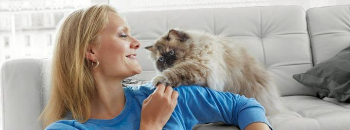 Persian cat and owner