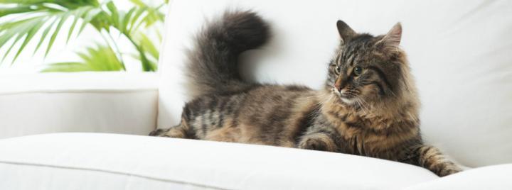 cec970075dce Επιθετική συμπεριφορά στις γάτες