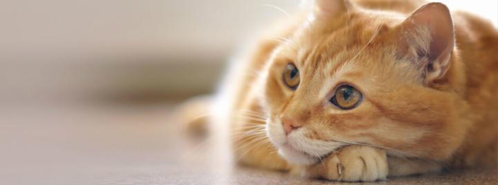 891afec57a63 Φροντίδα και ψυχολογία γάτας